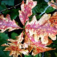 Iowa Fall Color Report